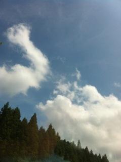 __yamagata3.jpg