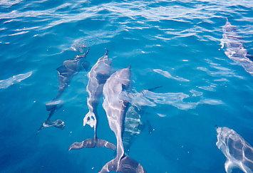 Dolphin0014.jpg