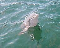 Dolphin0032.jpg