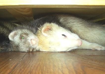 棚下で眠るマロンとマイキーJR