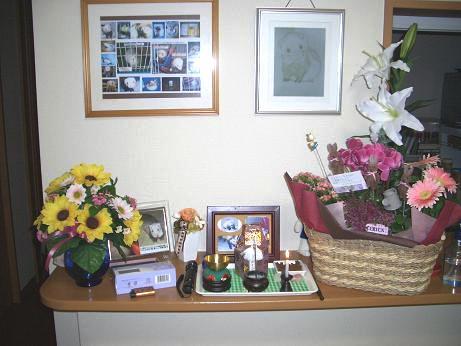 ジャスミン四十九日の献花
