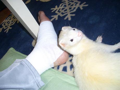 痛々しい足とマイキーJR