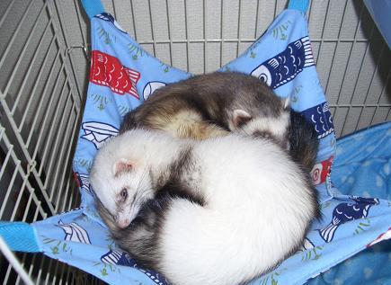 ラブ&ポン太JR寝姿1129
