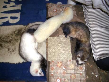みんな固まって寝てるよ!