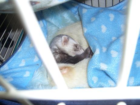 幸せそうな寝顔のマロン0114
