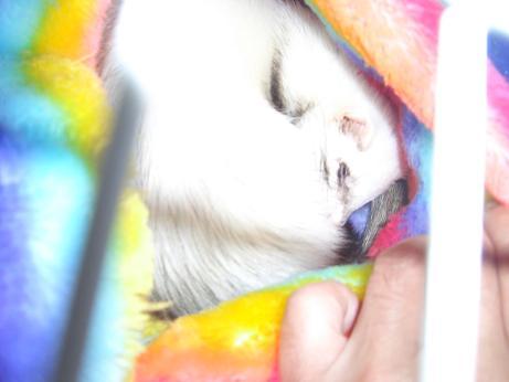 幸せそうな寝顔のラブ0114