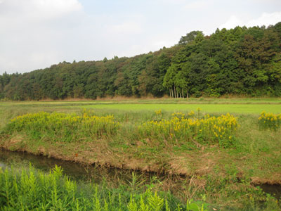 2010-10-22a.jpg