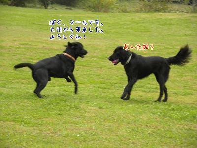 BFnU1O_f.jpg