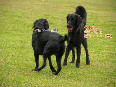 Tl8m9PJC.jpg