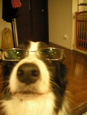 メガネのフラ