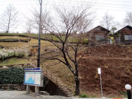 桜前線Ⅱ-3