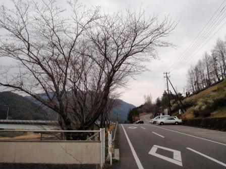 桜前線Ⅱ-2