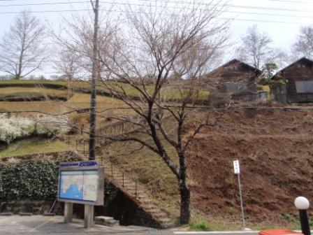 桜前線Ⅲ-3