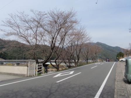 桜前線Ⅲ-2