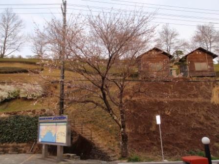 桜前線Ⅴ-3