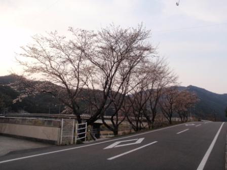 桜前線Ⅴ-2