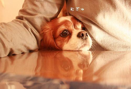 いちじくパウンド1