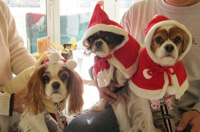 LAクリスマス1