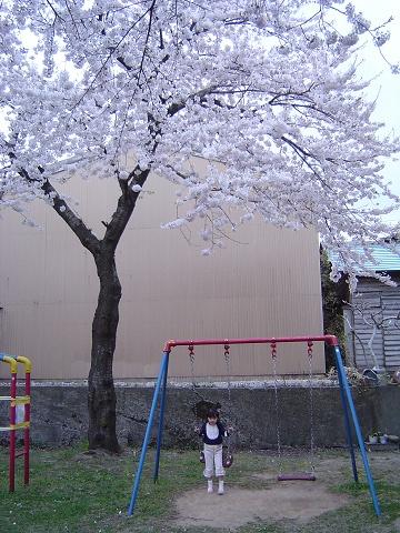 桜の下にて