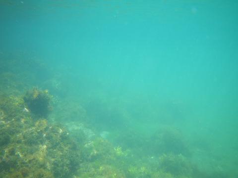 青い海かいな