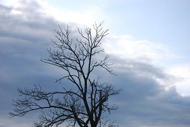 11・小春・雲