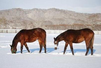 12・雪原・カン&ハーツ