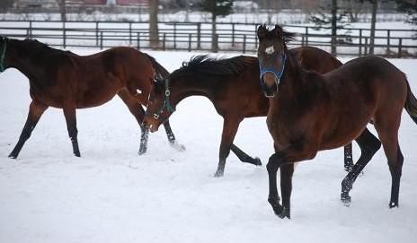 1・元旦・牝馬