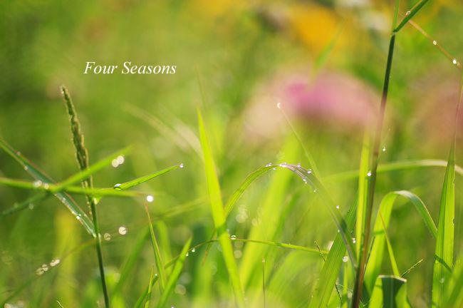 朝露と草むら