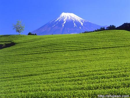 茶緑小富士