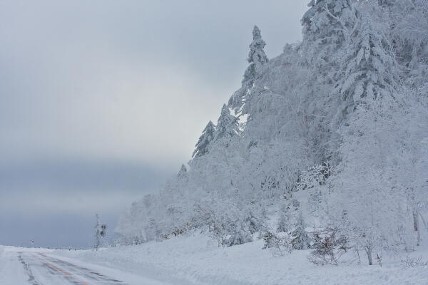 白一色の並木