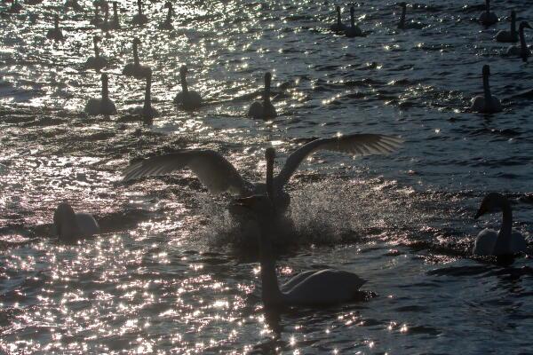 西日を浴びて 屈斜路湖
