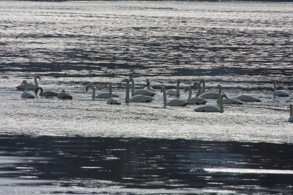 海氷の中で