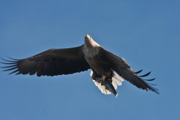 魚を鷲掴み