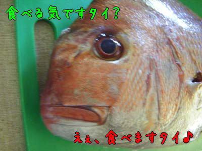 002_20101119174853.jpg