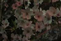 furufuru花見1