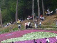 furufuru 羊山公園4
