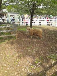 furufuru羊山公園6