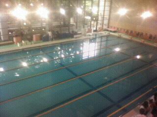 SON水泳 東京大会