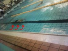 いらっしゃい!!! 祭闘家ばんざい!!!-SON水泳