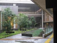 雨中の江戸城石垣 091007_cIMG_3767
