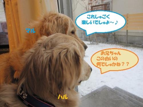 IMG_5055_convert_20120120203532.jpg