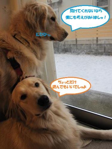 IMG_5057_convert_20120120212214.jpg