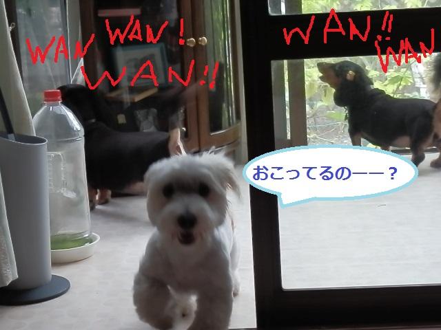 wan.jpg