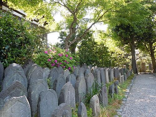 奈良旅行(2010.5月) 249