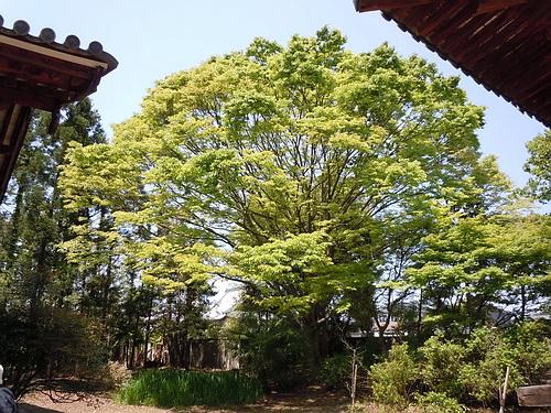 海竜王寺3