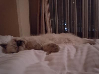 ホテルで爆睡するキリコ