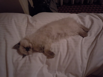 ベッドで眠るキリコ