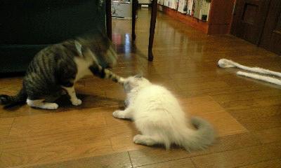 猫ボクシング3