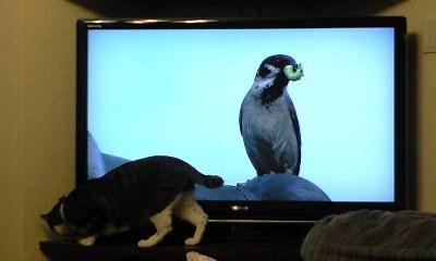 TVの後ろに探索に行ったキリコをマルコが・・