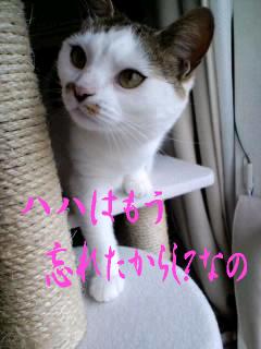 もんち-@神田川1